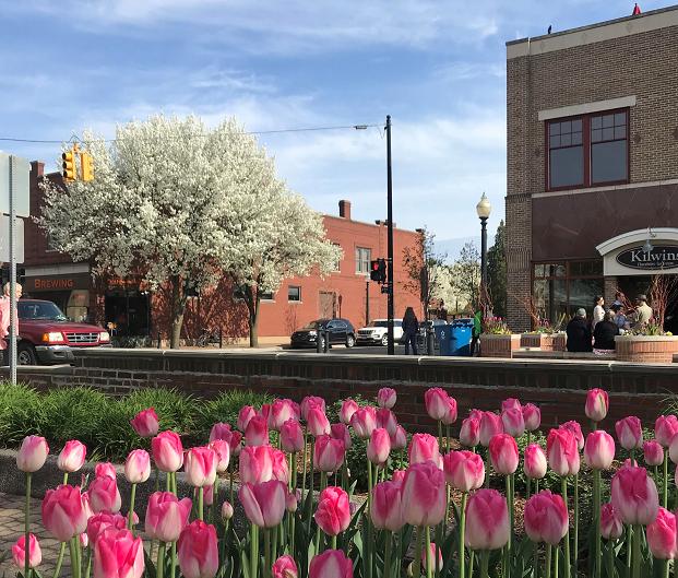 Tulip time in Michigan