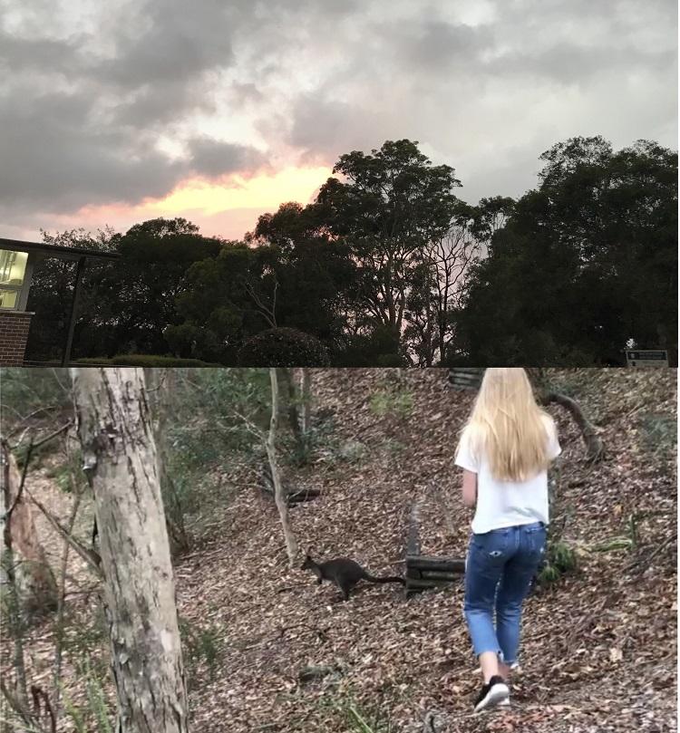 Vaihtari katsomassa Australian luontoa