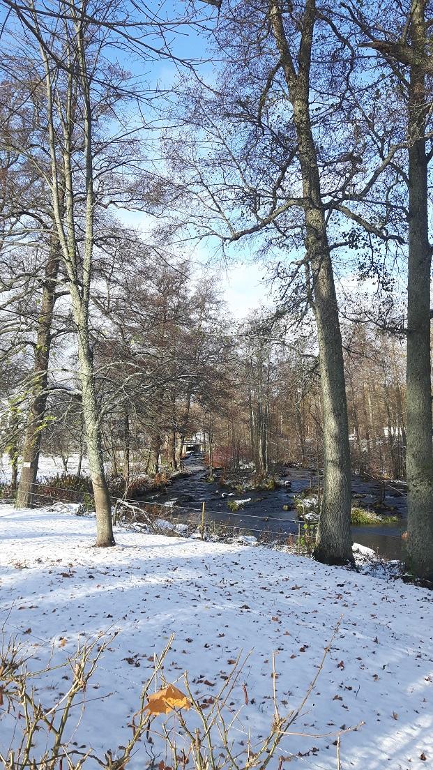 Ensilumi ruotsalaisessa puistossa