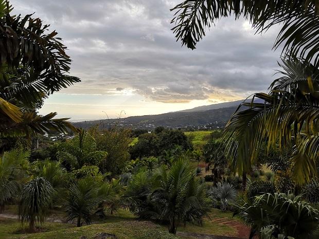 Palmupuisto La Reunionilla