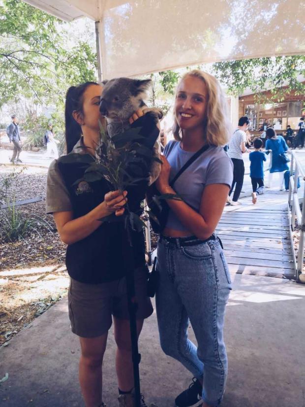 Line og koala