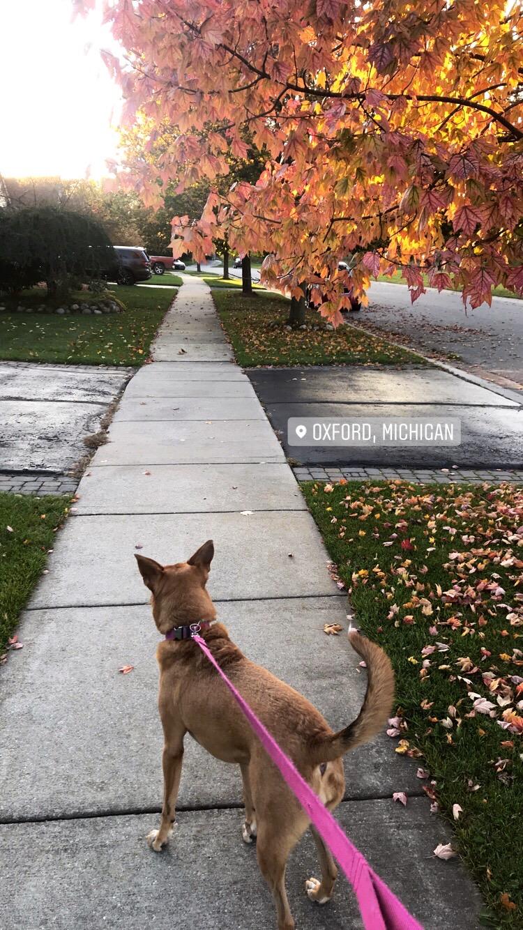 Går tur med en hund i høstomgivelser