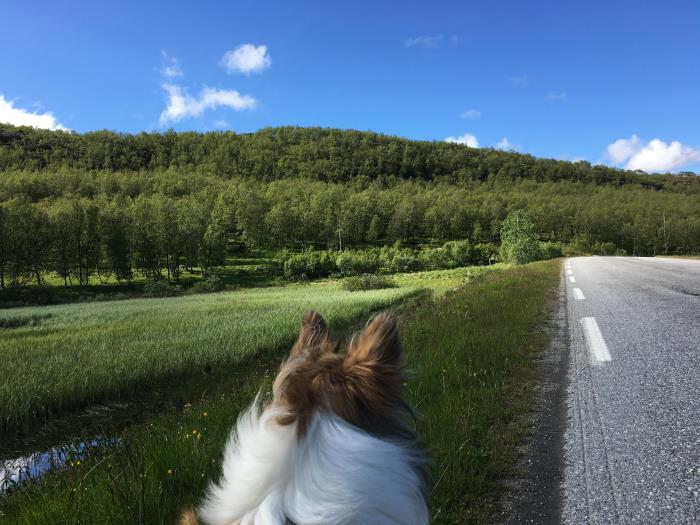 Hun i norsk natur