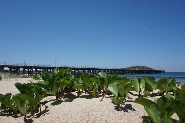 Växter på stranden