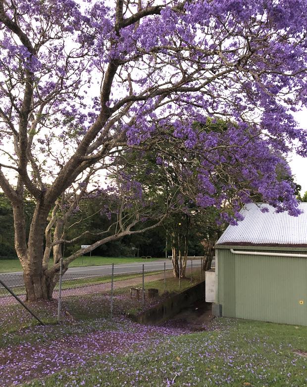 vackert träd med lila blommor