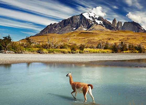 Llama roaming the Andes Mountain range