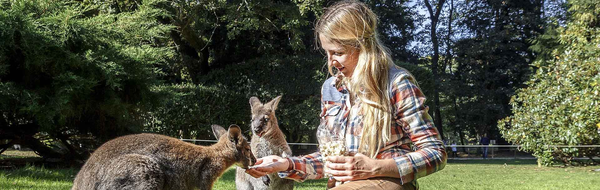 Experiencing Australian wildlife while studying abroad!