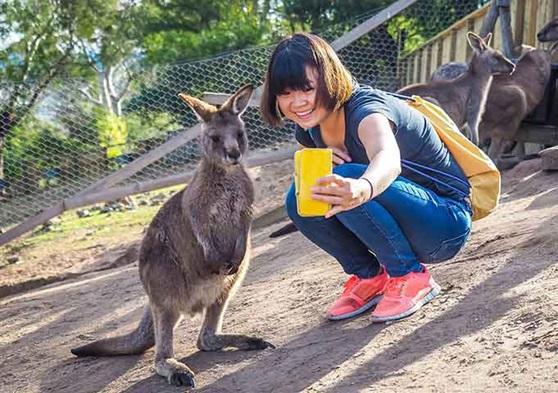 Kangaroo selfie with student