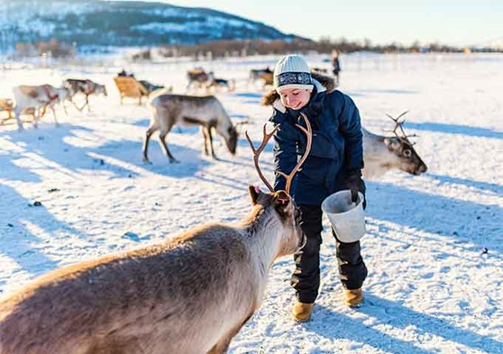See reindeer in Norway!