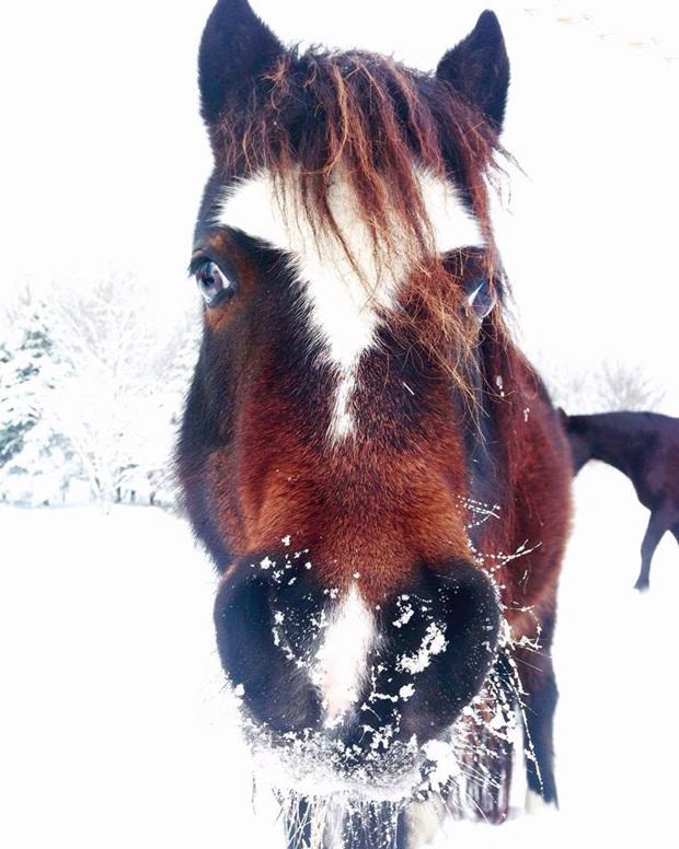 Fineste hesten