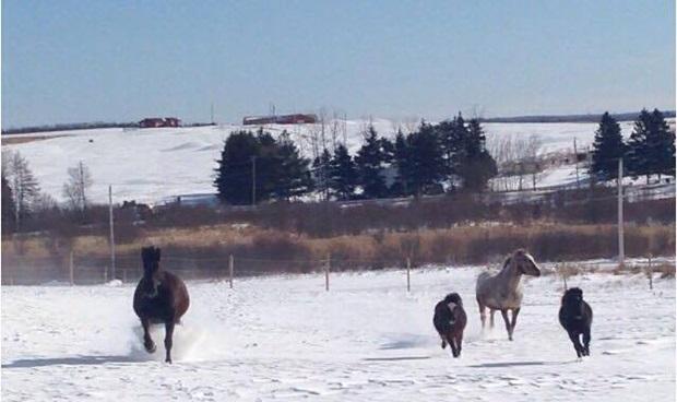 Nydelig vinterutsikt til hestene