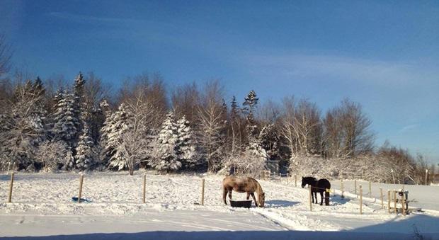 Vakkert vinterlandskap i Canada
