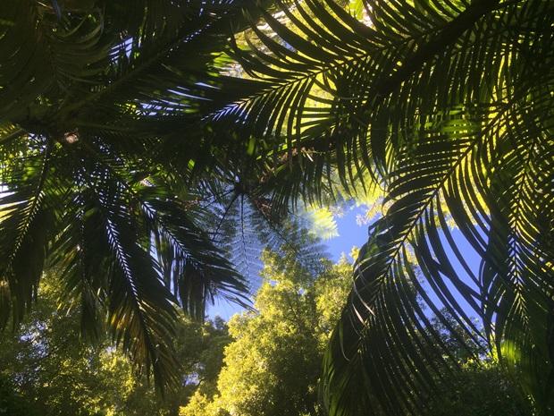 Nydelige palmer i New Zealand