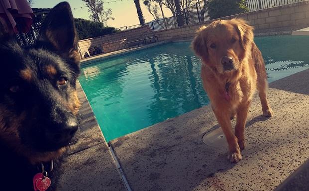 Hundene til Petter