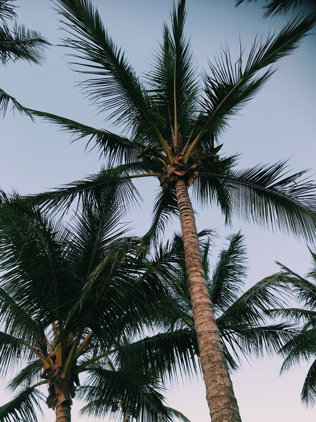 palmer i australia