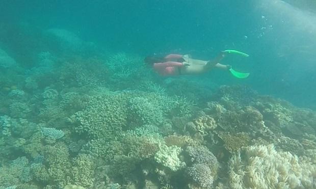 Snorkling the reef