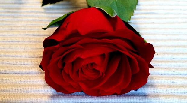 Utveksling er en dans på roser