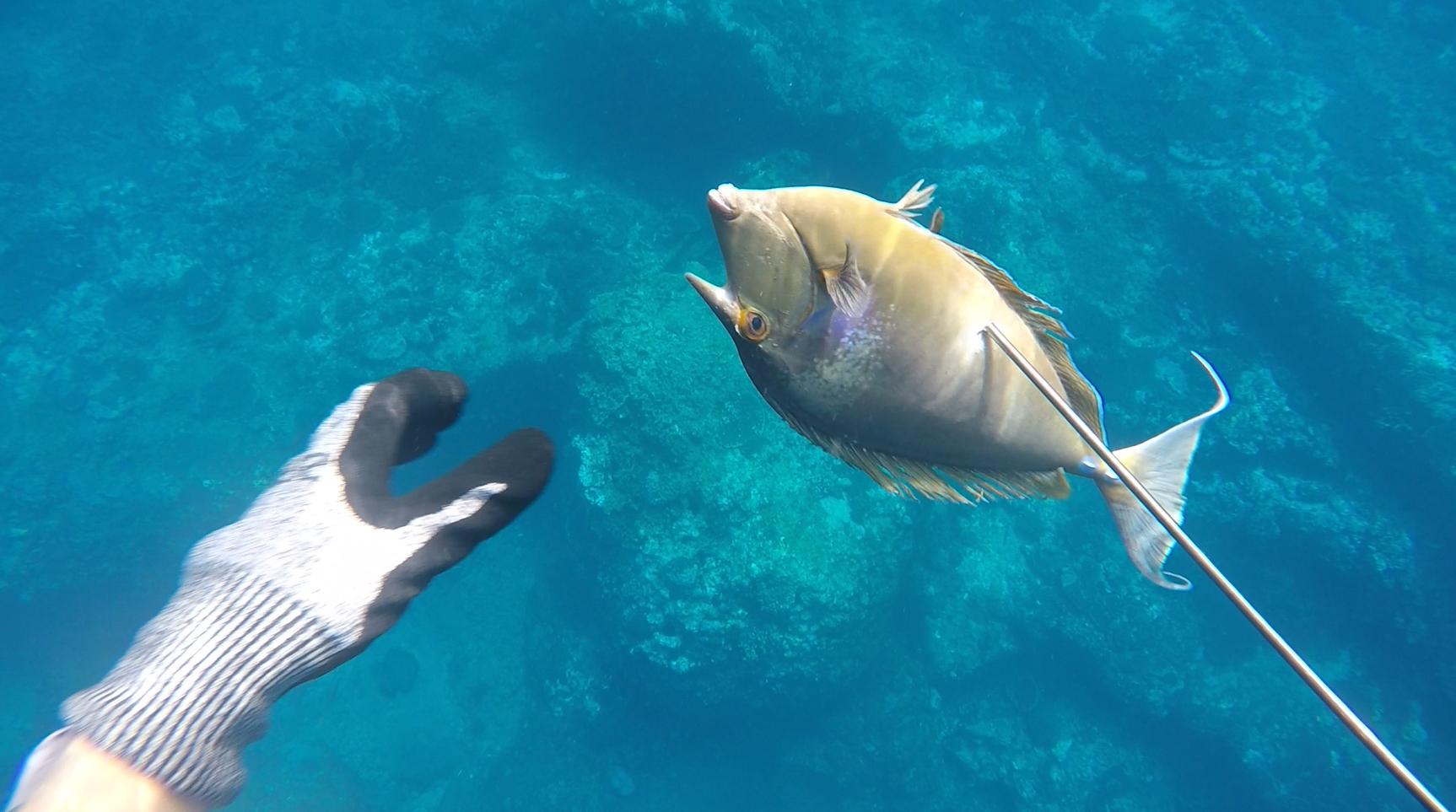 fisking La Reunion