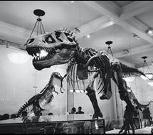 dinosaur utvekslingsstudent