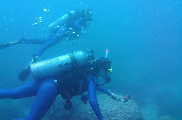 Dykning i Australien