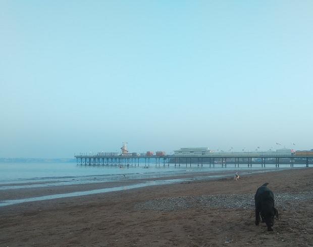 Hund leker på stranden
