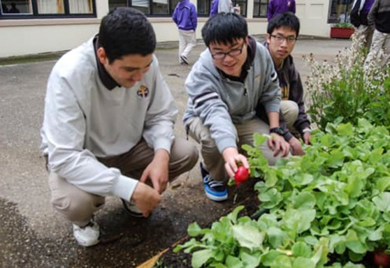 Boys gardening Archbishop Riordan High School California